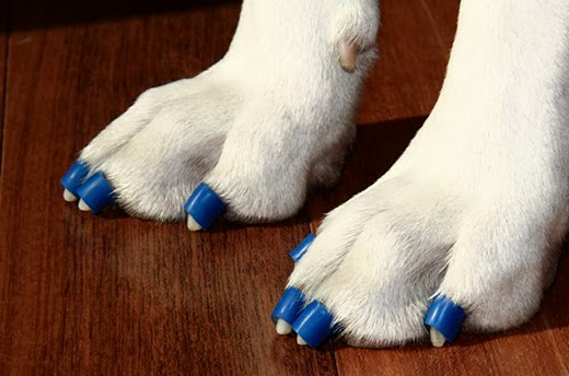 Toegrips Now Have A Canadian Distributor Dawg Business It S Your