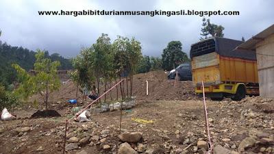 Harga Bibit Durian Musang King Bpk Faisal 082.137.433.114