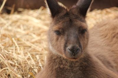 Kangaroo Island camping review