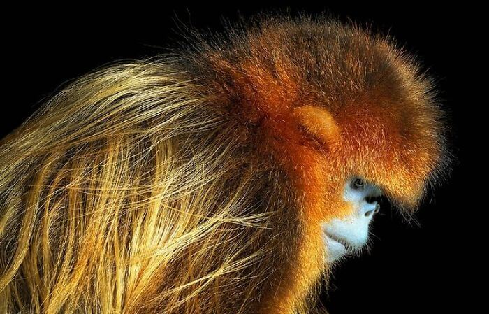 Photographer Spends Years Capturing Endangered Animals; The Extraordinary Photos Broke Our Hearts