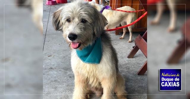 Caxias Shopping terá campanha de adoção e vacinação de animais dia 16 de fevereiro