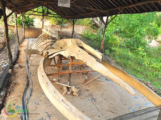 Kerangka Ikan Purba di Bukit Joko Tuo Karimunjawa