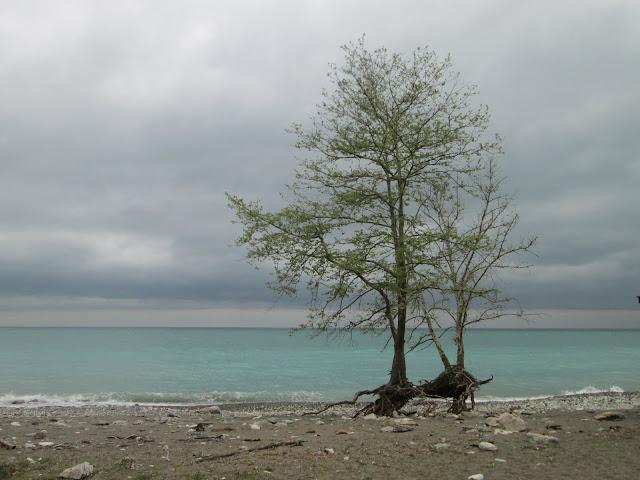 La costa de Abjasia está algo descuidada