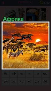 саванна со зверями в Африке на закате