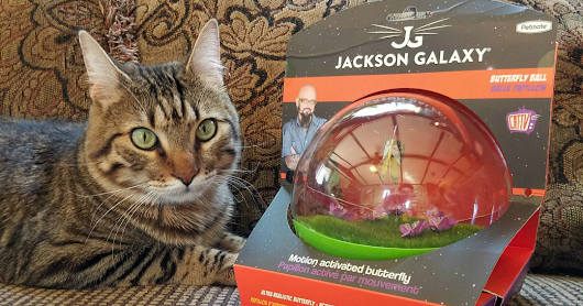 Butterfly Ball by Jackson Galaxy Provides Purrfect Stimulation for Cats