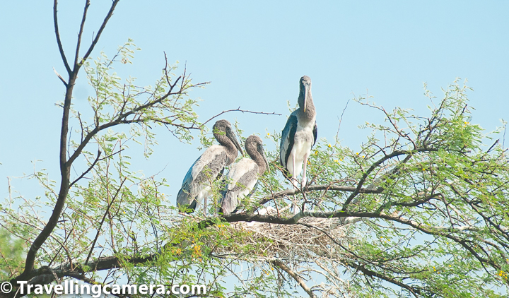 "We had always planned of visiting Keoladeo National Park at Bharatpur, Rajasthan, but it never materialized. Until November 2018. Nights were getting colder and the afternoon Sun had started losing its edge. News of migratory birds arriving in India had started floating. The plan to visit the Bird Sanctuary was on spur of the moment, as most good plans are. Once we had decided, we had two days to prepare for our trip, which included booking the hotel, researching, planning the itinerary etc. The first thing we did was book a hotel at walking distance from the gate of the National Park. We found The Sunbird quite interesting. It was about 500 metres from the National Park and was also recommended by other bloggers. Then we packed the essentials, which included the following: 1) Comfortable Summer Clothes - long-sleeved, cotton, comfortable 2) Comfortable walking shoes 3) Sunglasses 4) Sunscreen 5) Binoculars 6) Camera and lenses 7) The last thing we put in the bag was our copy of A Pictorial Field Guide to the Birds of India, and I will tell you why we needed more time to pack the book in a while. The next thing we did was make sure our car was equipped for the longish drive (~180km) across the state border. We checked that the insurance was valid and the pollution check was up to date. We also made sure that that the petrol was topped up and the tires were fine. Ours is an old car (>10 years) but has never given us trouble. We have clocked more than 1.3 lakhs kilometers on it and have also taken it on long drives. But we aren't seasoned highway drivers so extra precautions are needed. The last thing we did before heading out was that we went through the website Avibase, and marked out all the birds we may come across at the national park. At that time, we did this more out of excitement, but later found out that this was a really helpful activity. When we saw new birds at the sanctuary, we found it easier to identify them immediately. Almost all the time we were aware of what we were seeing, and what we should look forward to. Once we had marked the birds, we put the book back into our sack. We started the trip before dawn at around 5am. We took the expressway and then took the exit to the Hathras-Mathura Road. Then we took the Bharatpur-Mathura Road to reach the Keoladeo National Park in about 3 hours 30 minutes. Following is the route we followed. We reached Bharatpur at about 9 am. The hotel wasn't ready for us by then so we decided to have breakfast and head to the park. We only had one light backpack so luggage wasn't a problem. We discovered that breakfast at Hotel Sunbird was very expensive, so we headed to the nearby Hotel Om Sai and had some really nice parathas with Dahi there and then a cup of tea each. The food here was tasty, but the service was slow, so be prepared for that if you choose this option. From Hotel Om Sai, the entrance to the park was only about 300 metres. We reached there at about 10:30am and bought our tickets and then started our walk immediately. Most of our itinerary till now was not really final. For example, till the last moment, we were not sure whether we would be covering Fatehpur Sikri during this trip. We decided that we will go with the flow. And this was the best decision we made.The only thing we knew for sure was that we both had had a stressful time at work and wanted to walk it off. We knew that we would not be taking any ride to go into the park and would walk all the way - to and fro. While it worked for us, we should share that it is 5km one way to the Shiv Temple and it can get really tiring especially if the sun is out. So carry lots of water and energy bars to keep yourself well-nourished. If you do not wish to walk the entire way, you can hire a rickshaw. The rickshaw costs about 100 rs per hour + 100 hours for the binoculars. It you are not much of a walker, this is a good option. The Rickshaw pullers are very knowledgeable about the birds too. And almost always give you the right details. We heard one rickshaw puller share minute details such as why the Ibis we were seeing wasn't a black Ibis, but instead a Glossy Ibis, and how the parrot we were seeing wasn't a parrot, but a parakeet. It was really impressive. So you can just hire a rickshaw and not go in for an additional guide. The first few kilometres inside the park is normal jungle. You see some really pretty songbirds and impressive birds of prey on this stretch. There are some trails in this stretch that lead one off the beaten track. If you decide to take these, make sure you are wearing full length trousers because the bushes can be thorny and there's always a possibility of snakes etc. Also, don't head too deep into the forest, because it is easy to lose your way. We had a little adventure of our own, which I will share in a separate post. At about half-way, you reach the canteen and the checkpost. After this, towards the right is the starting point for the boat ride. We could not experience this, but have heard good things about it. You can try it if you so wish. Also, after this, the wetlands start on both the sides of the track and you start seeing the waterbirds - both migratory and resident. Most of the birds we saw were resident, but if you head there in January or February, you will surely see many more migratory birds. To know more about the birds and other fauna we saw here, please go through the following posts: Birds of Prey Herons and Egrets Storks and Cranes Songbirds Smaller Waterbirds Non-Passerine Birds Non-Avian Creatures Birds we need help in identifying We managed to cover the entire length of the walk and back before the closing time of the park (5pm). One mistake that we had made was that we didn't pack any lunch with us and as a result were dead tired and hungry by the time we got back. We went straight to the hotel, checked in, and then crashed. we slept for a couple of hours and then took a bath and headed out for dinner. Our tiredness was gone and with it our work stress too. For dinner we opted for Chacha Chicken Chacha Franky. The food was just okay and we wished we had gone over to Hotel Om Sai again. It was only late in the night that we decided that we had had enough of the national park and the thought of going back again at sunrise did not seem as enticing anymore. So we decided to pack up and head to Fatehpur Sikri in the morning. That turned out to be a really ""interesting"" experience, and we will talk about it in another post. The entire trip lasted about 36 hours, but it refreshed us and has motivated us to try more such adventures. We highly recommend a trip to the Keoladeo National Park, and not only for the vast variety of birds you will see here, but also for the experience. This is a well-managed national park and will help you reconnect with nature and rejuvenate. If you need any other information, you can write to us at VJ@travellingcamera.com or leave a comment on this post and we will be happy to answer."