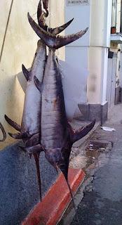 Ikan Todak, Ikan bermulut Pedang