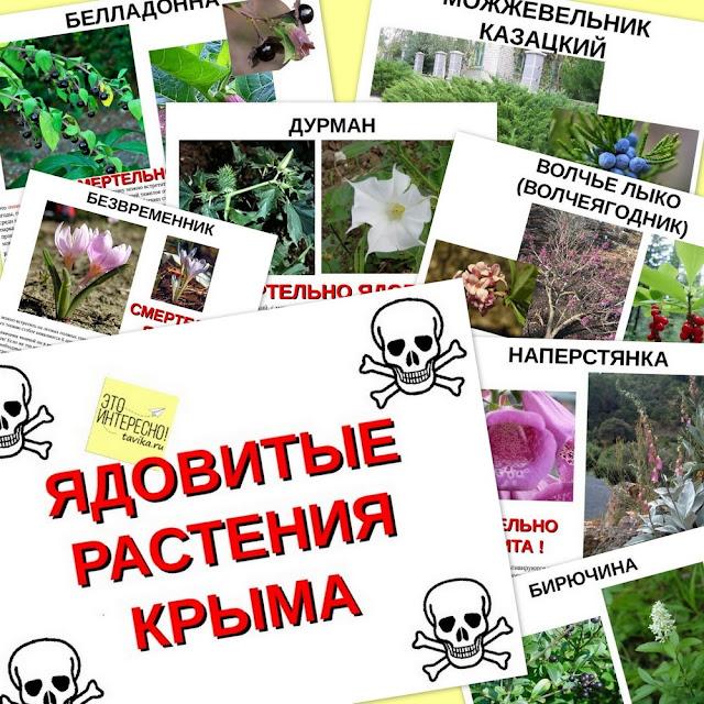 презентация о Крыме: ядовитые растения
