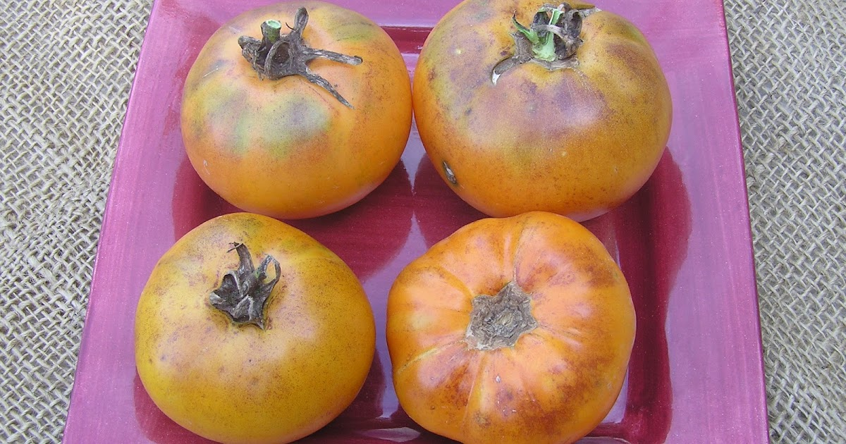 Tree and Twig Farm Blog: Orange/Yellow Tomato Varieties 2013
