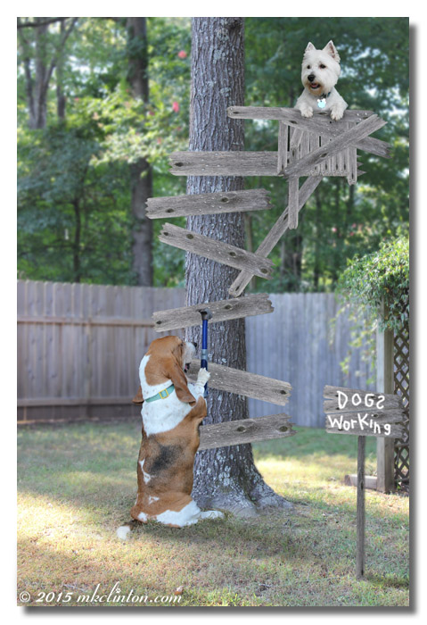 Basset hammering on tree with Westie in squirrel stand