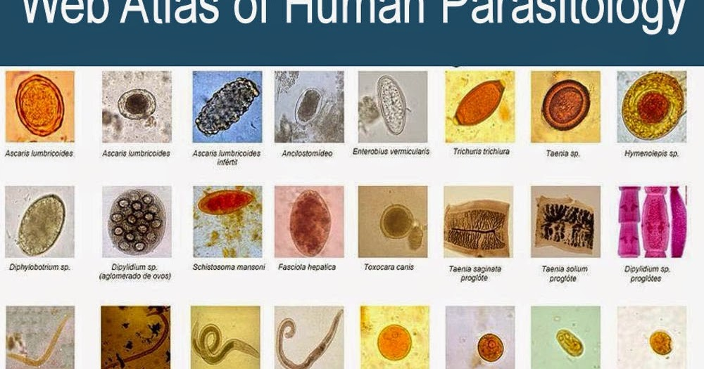 Medical Laboratory and Biomedical Science: Web Atlas of Human