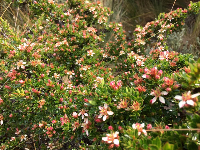 Caja Pink Flowers