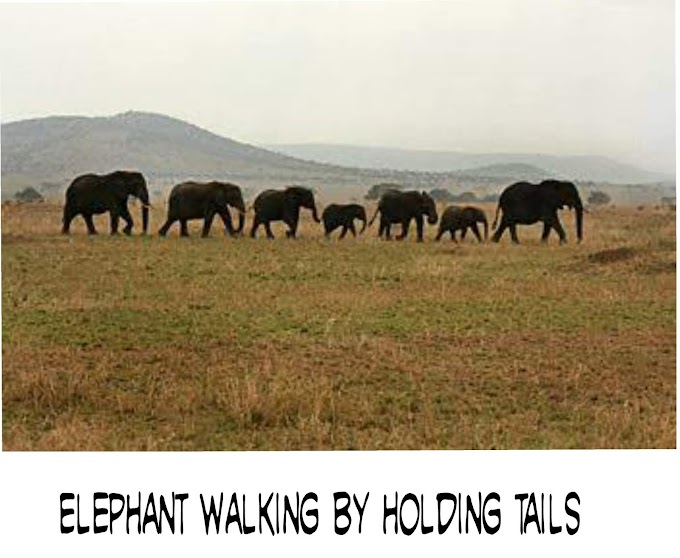 Holding Hands | Children's Poem