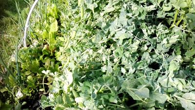 La permaculture et ses 12 principes : revenons aux bases