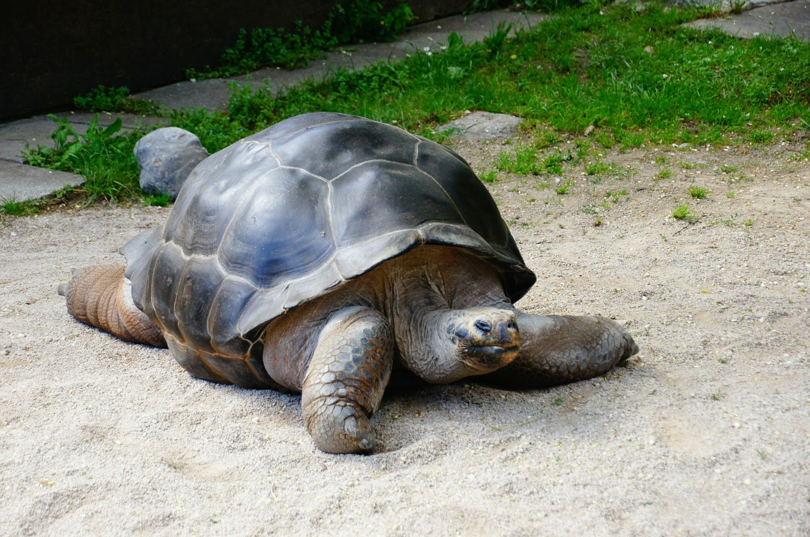What to do and places to visit in Mauritius for kids and families - giant tortoise