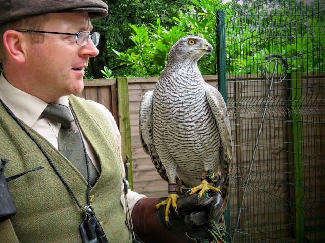 Jason Deasy and his Goshawk at Mount Falcon estate in County Mayo, Ireland
