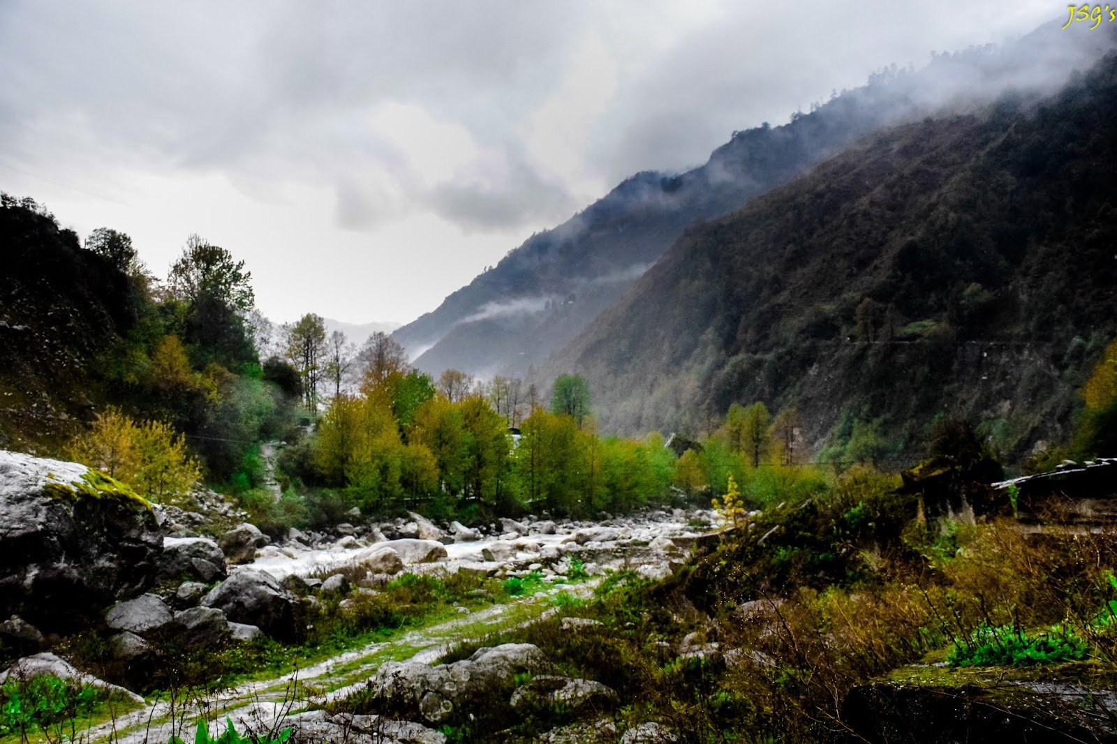 Greeneries along the Lachung Chu: Photo by Jayashree Sengupta @DoiBedouin