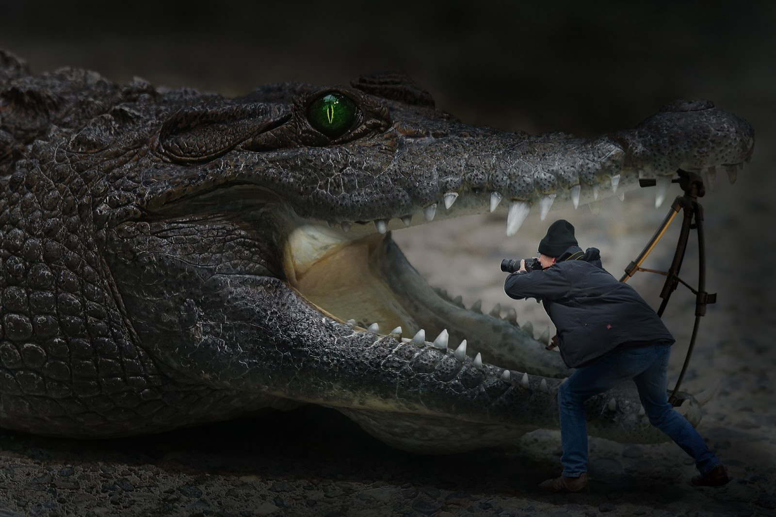 A funny picture of a tiny many taking photo of a crocodile.