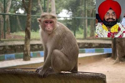 Macacos matam vice-prefeito