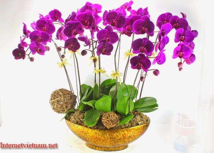Những Đóa Hoa Thường Cắm Trong Gia Đình Ngày Tết 4