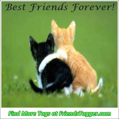 cat quotes best friends forever!