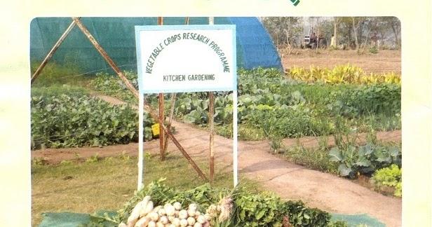 How to Grow Vegetables & Fruits, Kitchen Gardening - Urdu ...