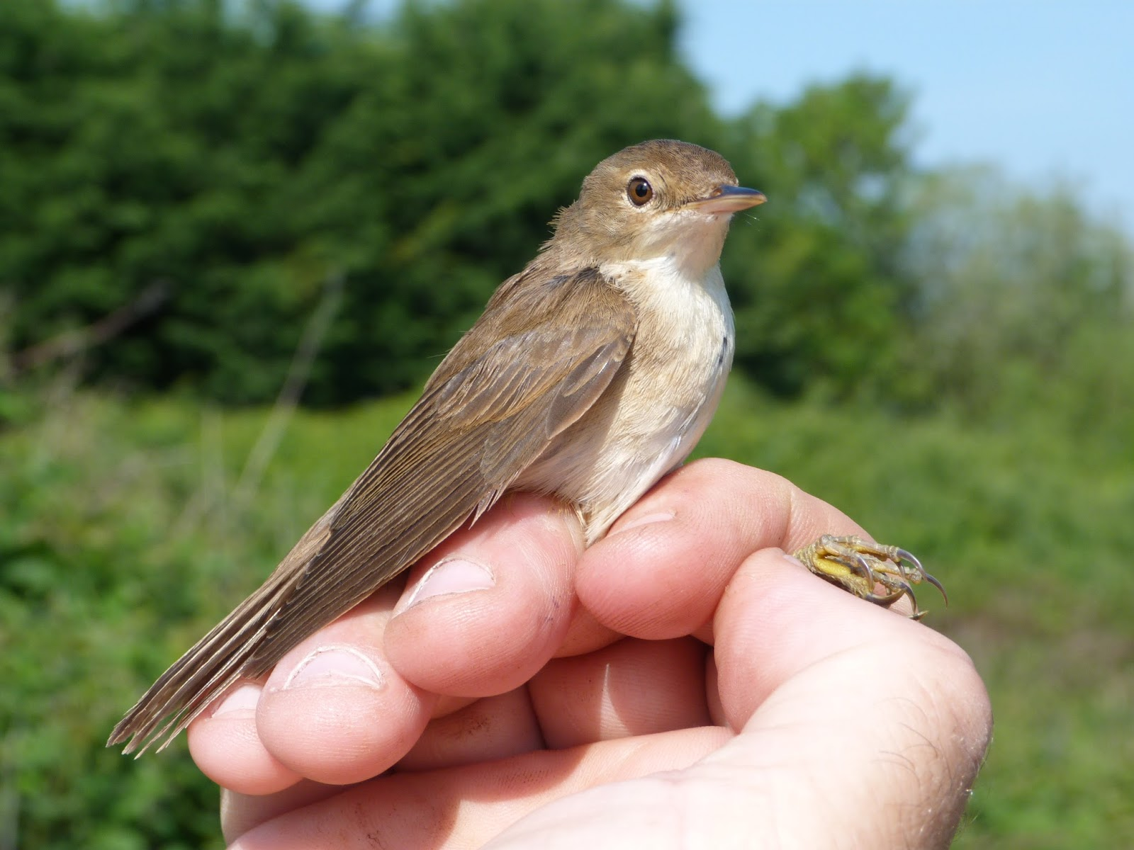 Bird Ringing Course Uk