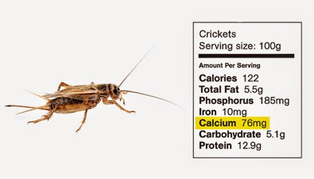 How Do Arthropods Eat And Digest Food