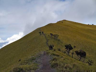 puncak suwanting gunung merbabu