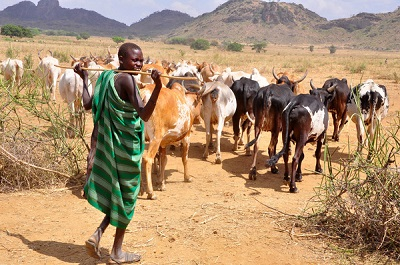 Convert Sambisa Forest to Grazing Land for Herdsmen, Benue Youths Tell FG