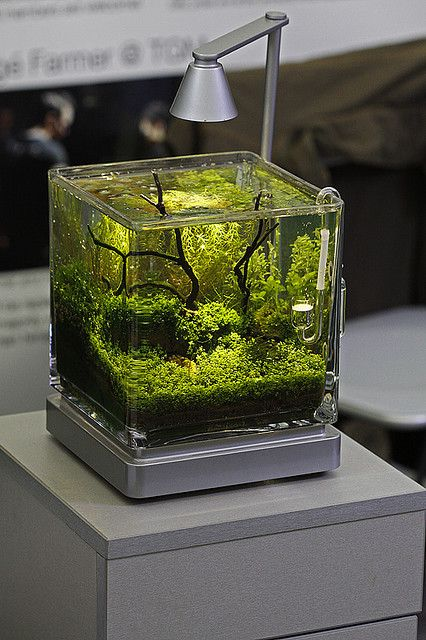 http://www.masrohman.com/2018/12/tips-sederhana-cara-membuat-aquascape.html