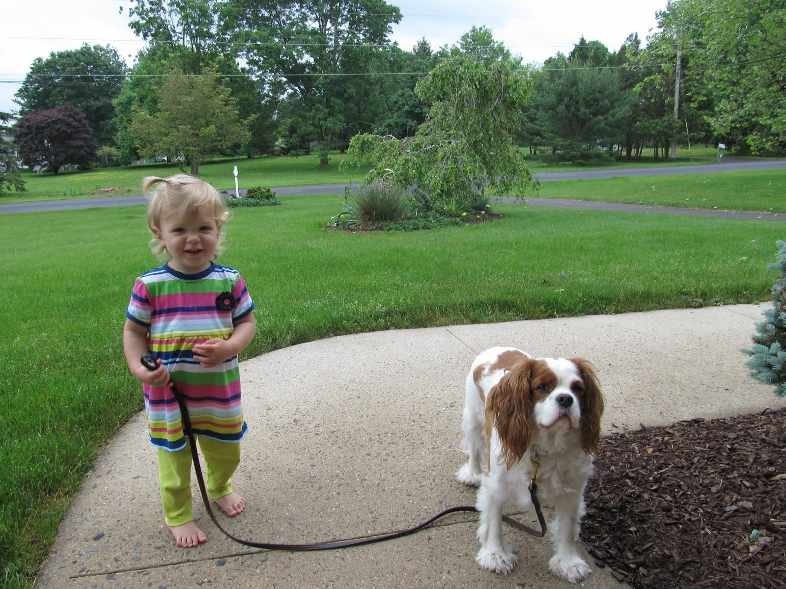 50 Things To Know About Cavalier King Charles Spaniels 50 Things