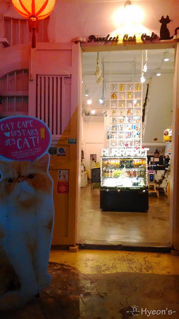 purrfect cat cafe penang