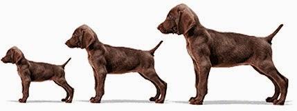 Dog Life Cycles