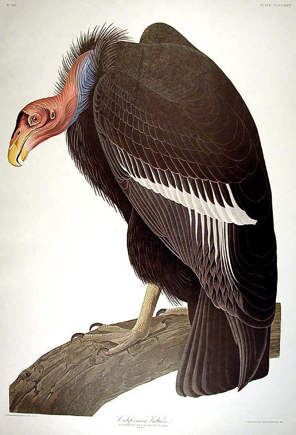 blue marine el condor