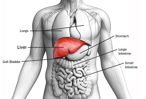 Obat Liver Bengkak Di Apotik Kimia Farma