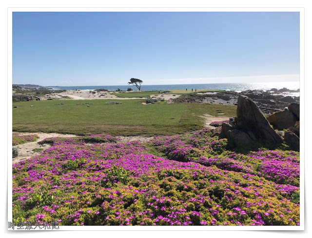 Monterey 17 miles drive 8