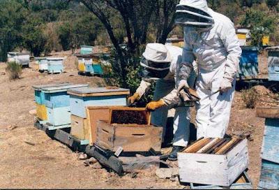 miel, Beceite, Beseit, arnes, madera, tablillas, apicultores