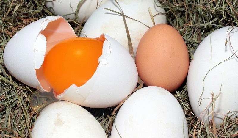Quantas calorias tem um ovo? E por que você deve comer mais ovos