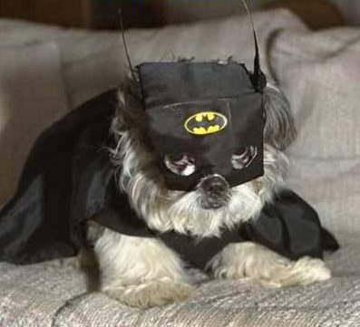 Batman And Robin Dog Halloween Costumes