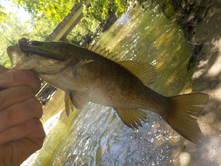 middle patuxent smallmouth on a z-man trd finesse worm