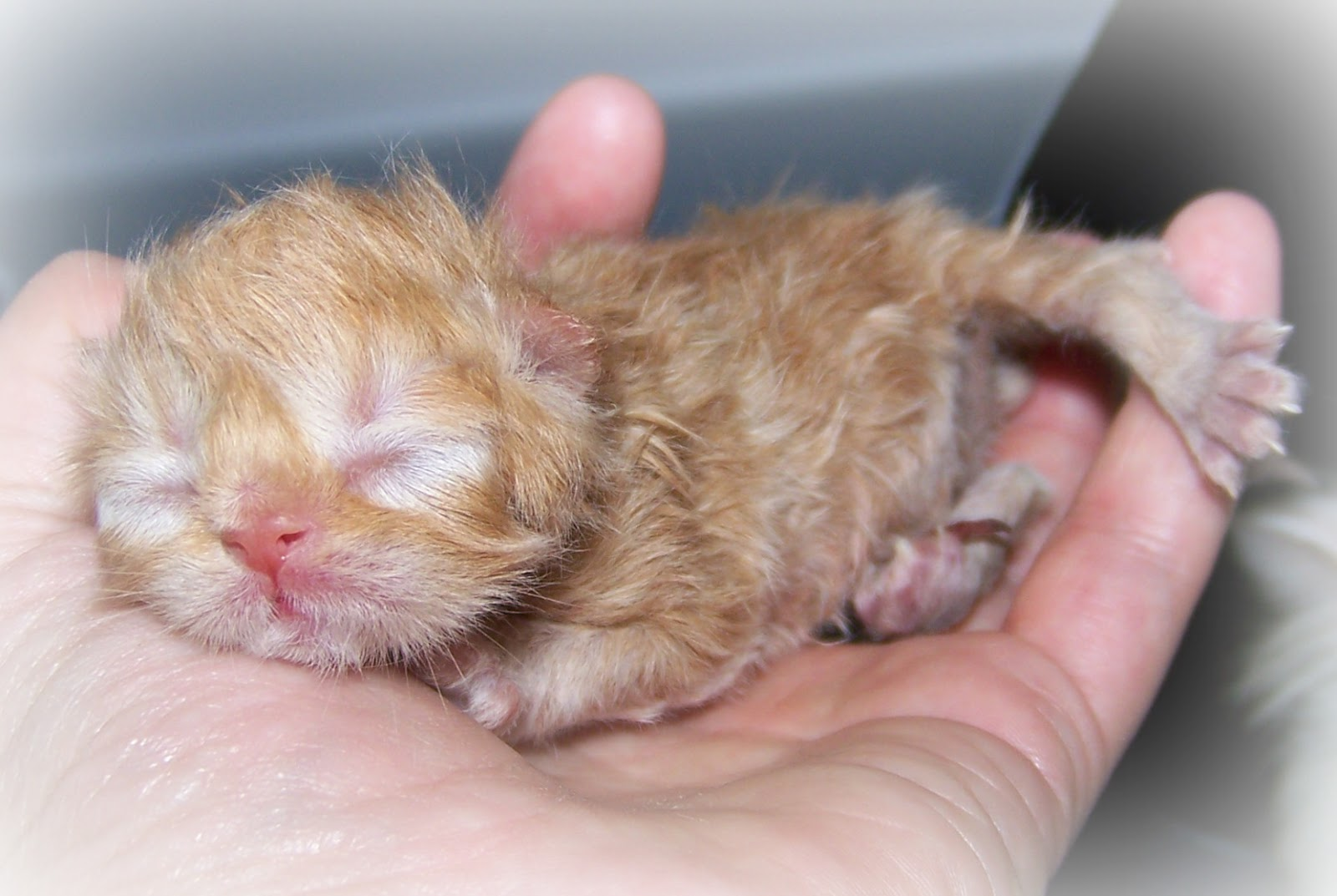 How to Take Care of Abandoned Newborn Kittens Worship Cats