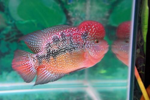 Kisah Penuh Hikmah, Putri Al Mishri dengan Ikan yang Bertasbih