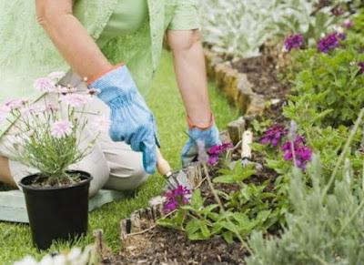 Які квіти садять у травні