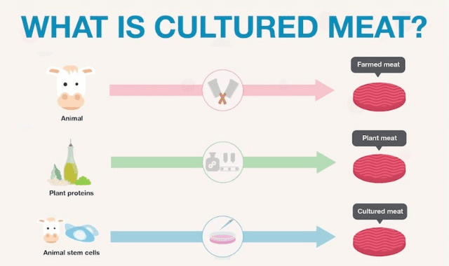 What Is Cultured Meat?
