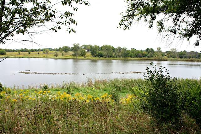 Lovely lake in the prairie at Peck Farm in Geneva, IL.