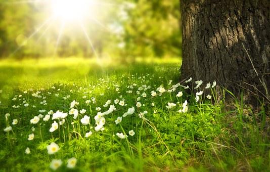 Faktor-faktor Apa Mempengaruhi Proses Fotosintesis? Ishardina Kholifatul Hidayati