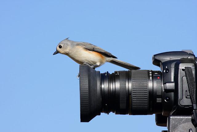 burung diatas kamera