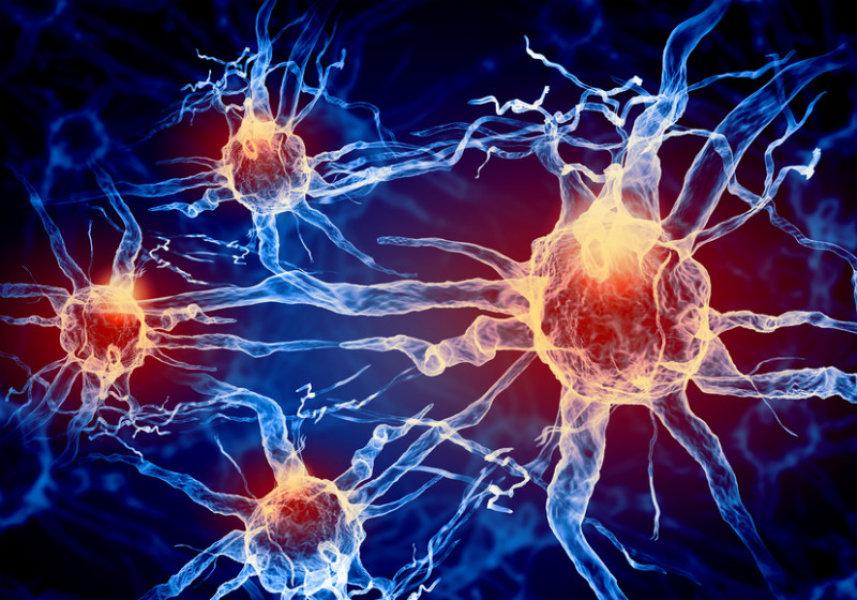 Cuales son las ramas de la fisiologia y anatomia del cuerpo humano ...
