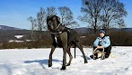 10 Types of Dogs World's Largest